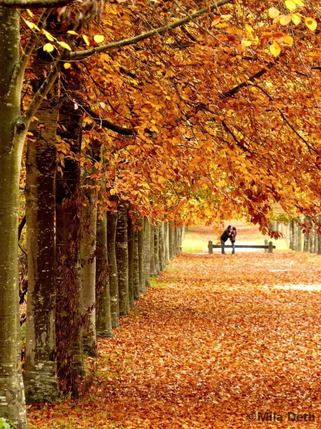 amoureux_d_automne