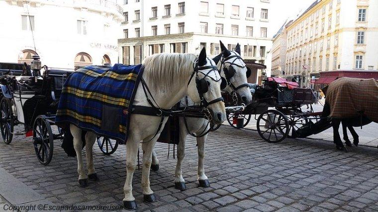 Les calèches devant le Hofburg
