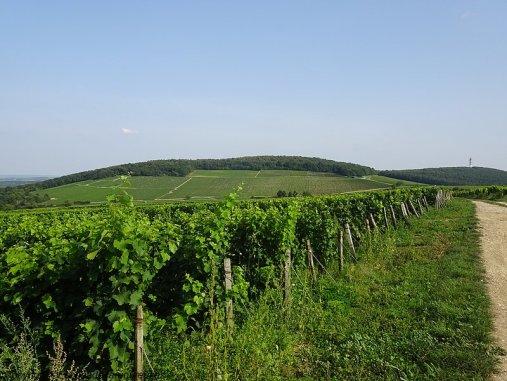 Se promener dans les vignes autour de Sancerre